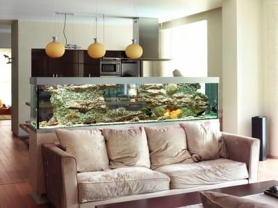 bardzo duże akwarium