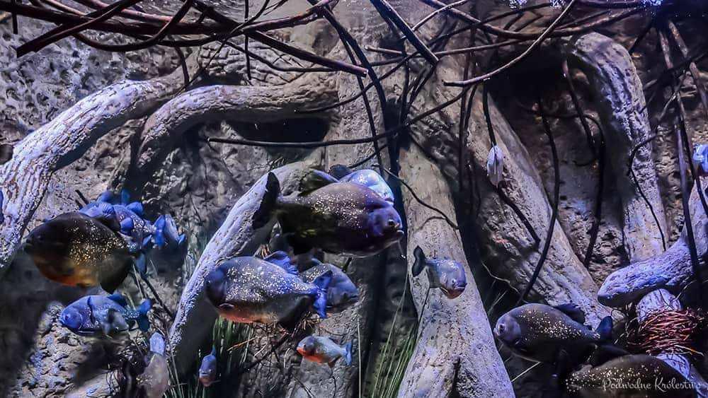 Akwarium biotopowe czyli naturalne