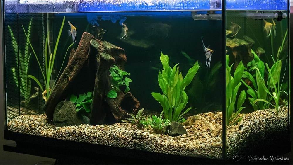 Akwarium wielogatunkowe