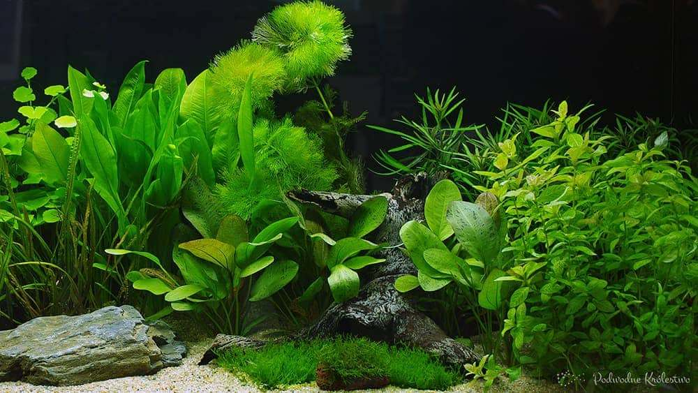 Piękne akwarium roslinne