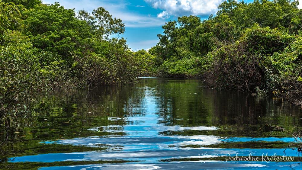 Amazonia - Podwodne Królestwo