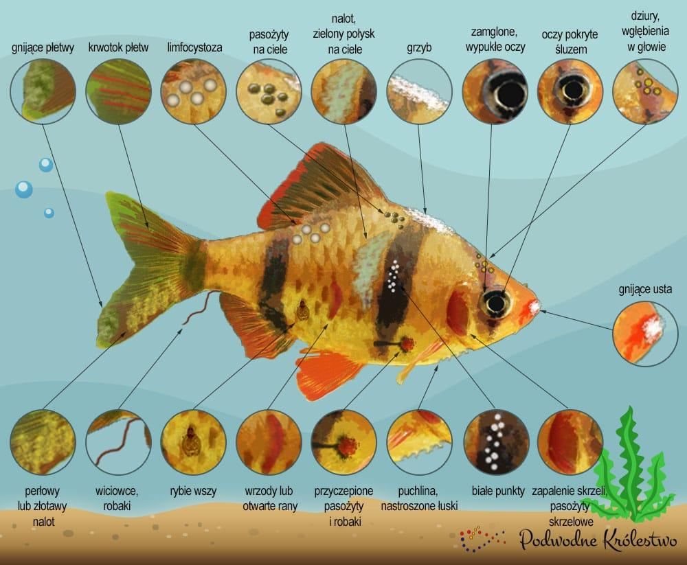 Leczenie ryb akwariowych