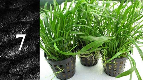 Sadzenie-roślin-w-akwarium-min