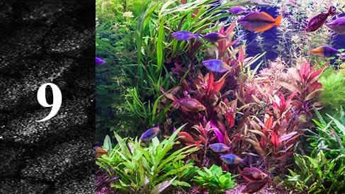 Wpuszczanie-ryb-do-akwarium-min