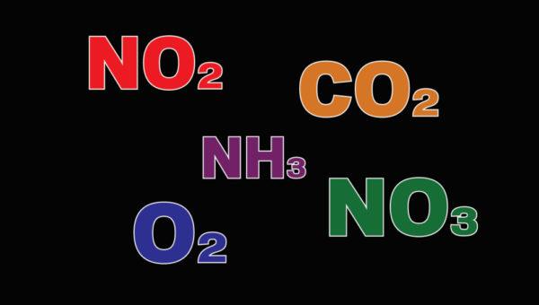 Cykl azotowy w akwarium.