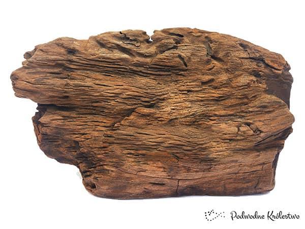 Fragment korzenia akwarystycznego