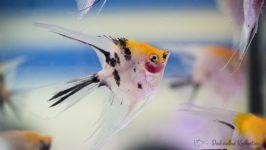 Ryby akwariowe