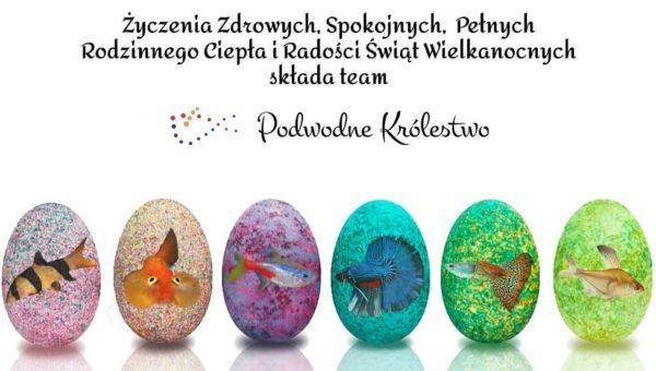 podwodekrolestwo.pl