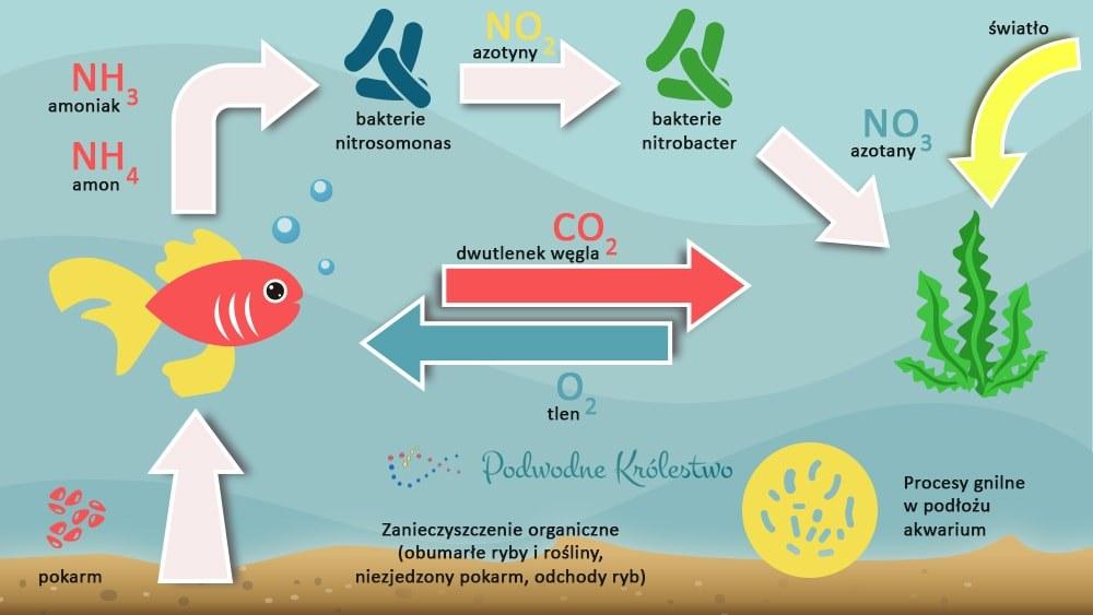 Cykl azotowy w akwarium