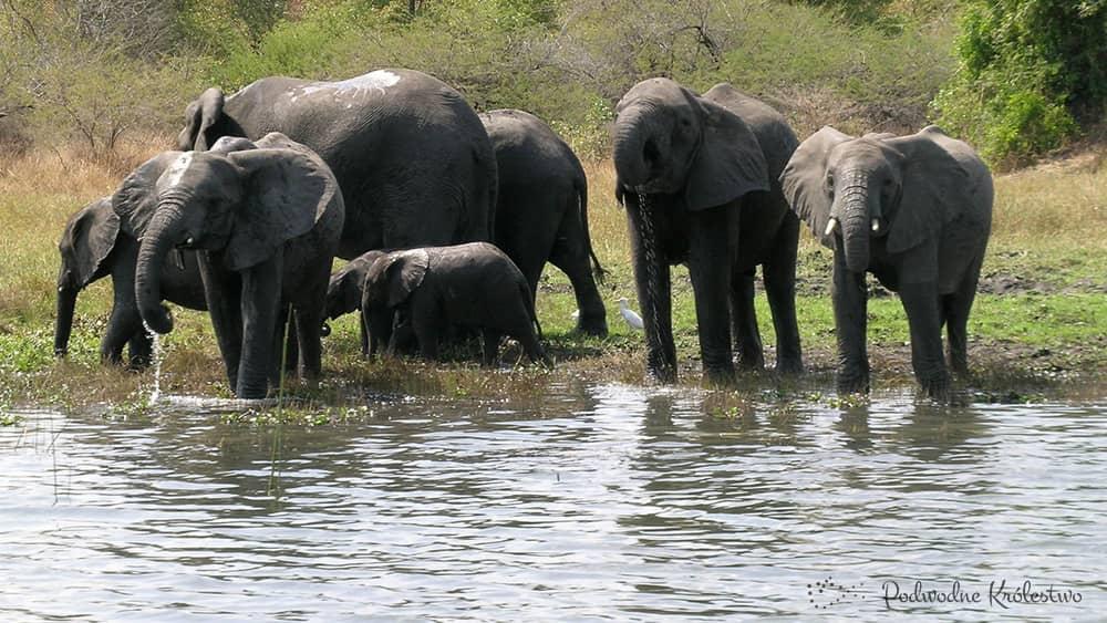 Dopływ jeziora Malawi