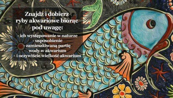 Ryby akwariowe - wyszukiwanie gatunków