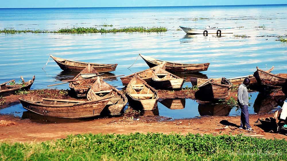 Biotopy na świecie - Jezioro Wiktorii
